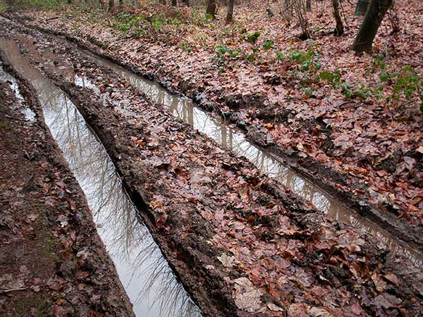 Tire tracks through the mud